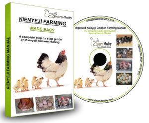 Kienyeji Chicken farming... </p srcset=