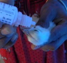 Kienyeji vaccination