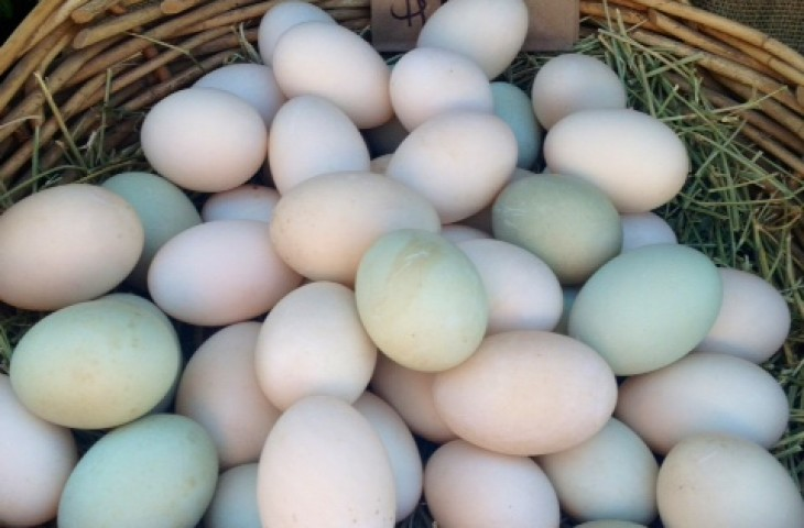 Duck Eggs | Ziwani Poultry