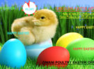 Ziwani Easter Offers!!!